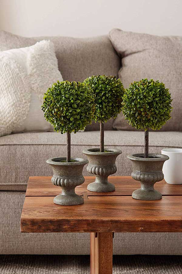 Topiary Boxwood Urns on Wood Table